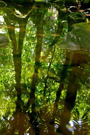 Watery reflection in Moorea, Tahiti