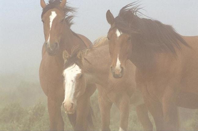 Wild Horses in Argentina