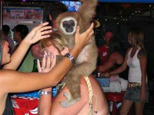THAILAND: Gibbon Conservation in Phuket