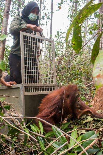 Yayasan IAR Indonesia release Kasih