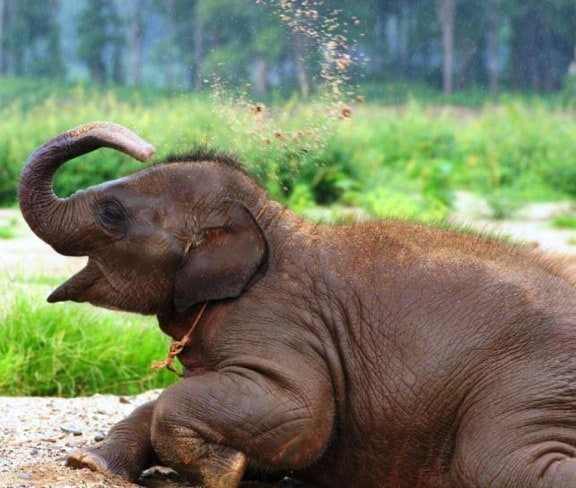 Ecotourism in Acition -Baby Elephant at Elephant Nature Park, Thailand