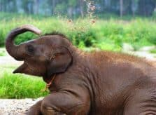 Baby Elephant at Elephant Nature Park