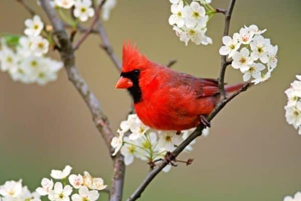 GO GREEN TIP #91: Attract Birds To Your Garden