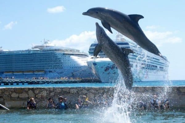 Dolphin Discovery's Costa Maya Location