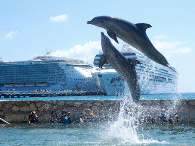 Dolphin Discovery's Costa Maya Location
