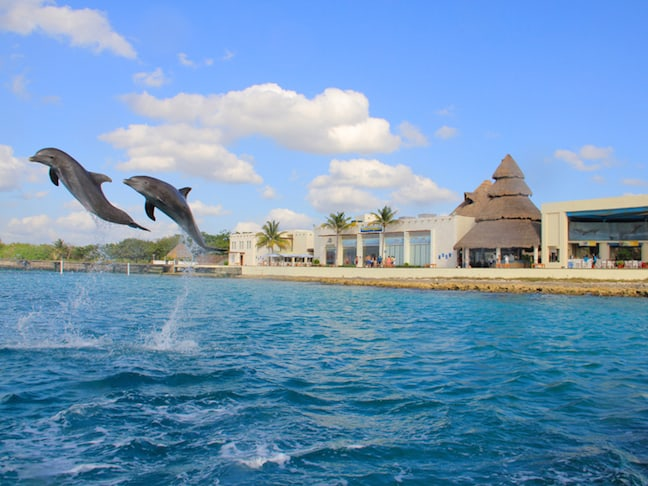 Dolphin Show at Dolphin Discovery in Cozumel
