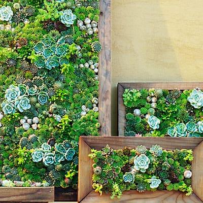 go green tip 99 how to make a do it yourself vertical garden. Black Bedroom Furniture Sets. Home Design Ideas