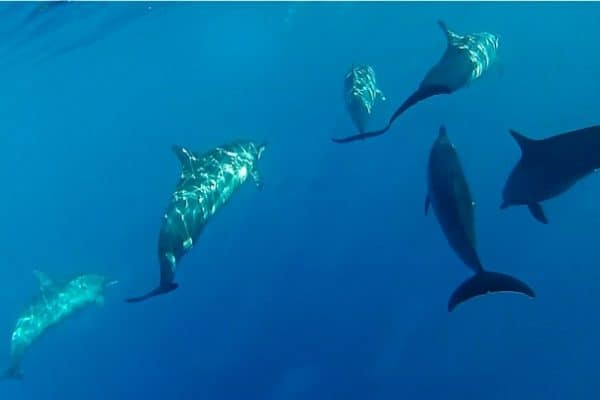 ECO NEWS: Cancun Cancels TBEX Dolphin Tours