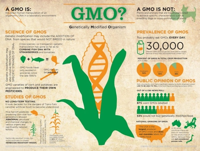 GMO OMG: what is a GMO?