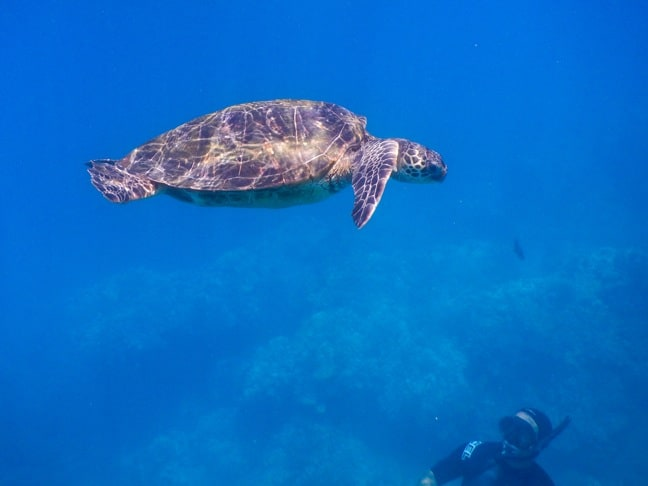 Diving with Green Sea Turtles in Kauai, Hawaii