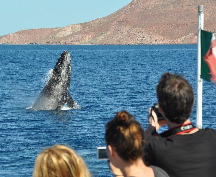 Humpback Whale Encounter
