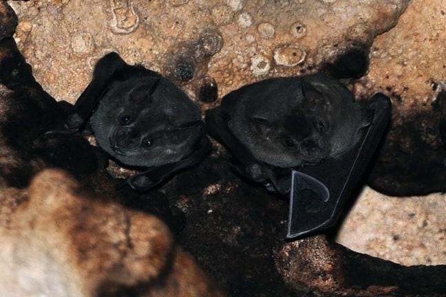 Bats inside a Rio Secreto Cenote