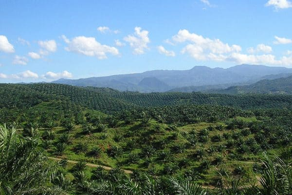 ECO NEWS: Palm Oil Threatens Palawan Philippines (& the Planet)