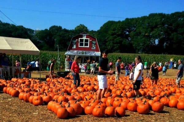 Top 5 Autumn Activities Around Atlanta