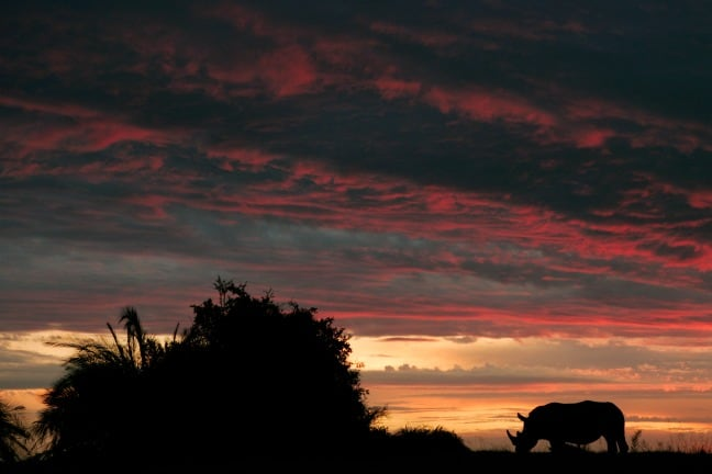Rhino at Sunset in Africa photographed by Beverly Joubert