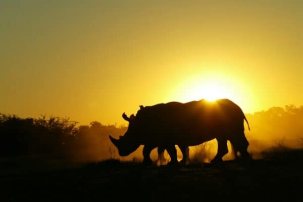 INTERVIEW: NatGeo's Dereck Joubert on Rhinos Without Borders