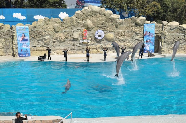 Dolphin Discovery at Six Flags, Mexico City