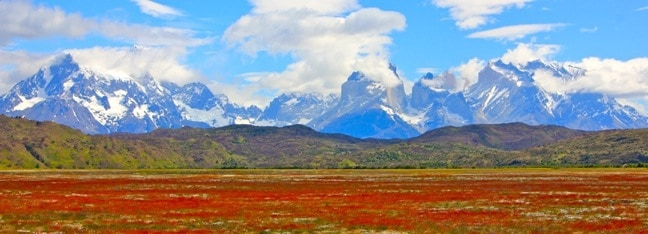 Vinagrillo (a.k.a. Common Sorrel) at the Base of Torres Del Paine