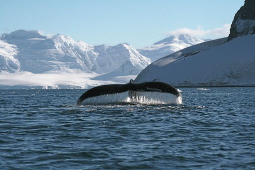 Top 5 antarctica ecotourism attractions for Best places to visit in antarctica