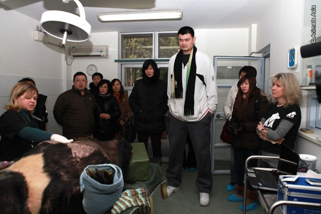 NBA Legend Yao Ming Visits the Animals Asia Foundation Bear Sanctuary